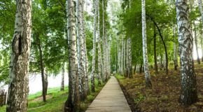 How Walking In The Woods Benefits Your Health